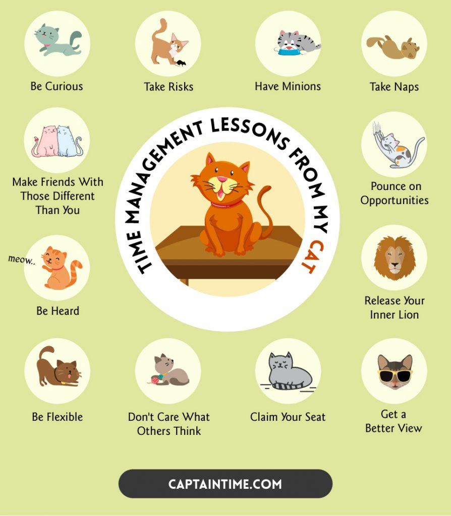 time management lessons from my cat